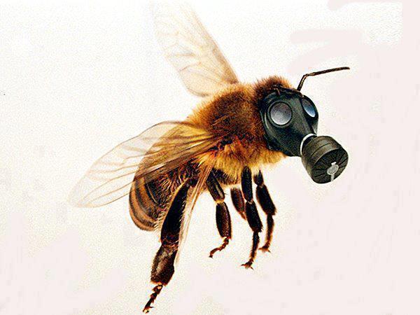Apocalipsis Bee!!