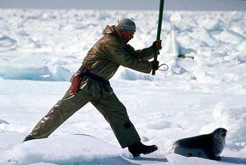 cazadores-focas